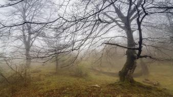 Landscapes nature fog secret branches wallpaper