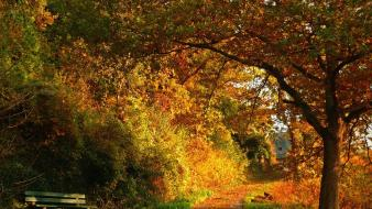 Landscapes nature trees forest autumn wallpaper