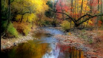 Landscapes nature trees wood stones autumn wallpaper