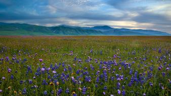 Mountains landscapes fields california meadows blue flowers wildflowers Wallpaper