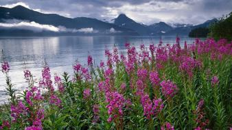 Mountains landscapes nature flowers alaska lakes national park wallpaper