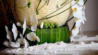 Nature flowers baskets orchids white wallpaper