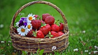 Nature flowers fruits grass strawberries baskets daisies wallpaper