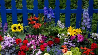 Nature flowers washington picket fence wallpaper