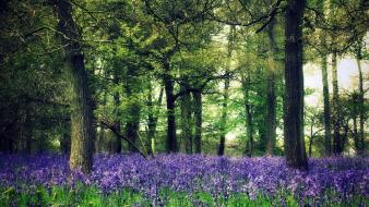 Nature trees flowers forest wallpaper