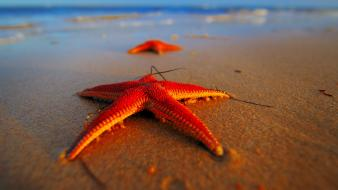 Beach starfish Wallpaper