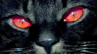 Close-up cats animals red eyes wallpaper