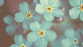 Flowers forget-me-nots blue wallpaper