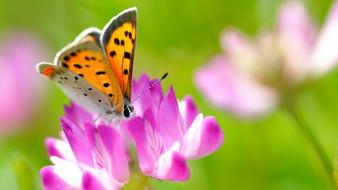 Flowers insects macro butterflies wallpaper