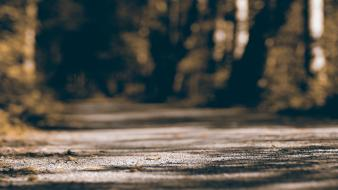 Forest bokeh roads alley wallpaper