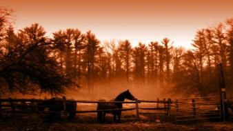 Landscapes nature horses wallpaper