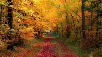 Landscapes nature roads autumn wallpaper