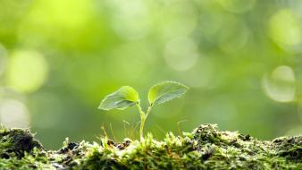 Plants macro sprouts wallpaper
