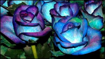 Video games blue roses wallpaper