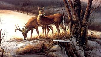 Animals deer artwork wallpaper