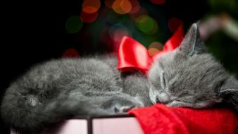 Cats animals presents christmas wallpaper