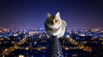 City lights balance nighttime pole domestic cat wallpaper