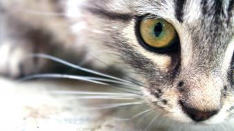 Close-up cats animals wallpaper