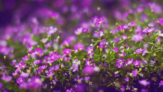 Flowers bokeh purple wallpaper