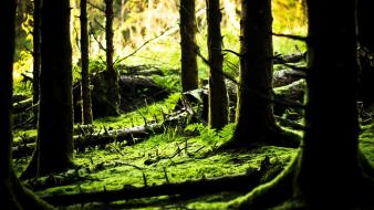Green nature forest ireland moss wallpaper