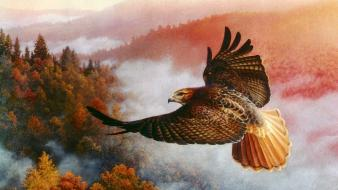 Hawk red tail view wallpaper