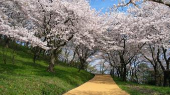Japan nature cherry blossoms wallpaper