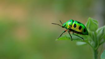 Nature insects leaves beetles wallpaper