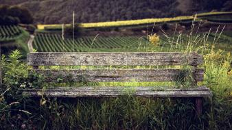 Nature wood plants bench wallpaper