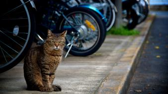 Streets cats animals roads motorbikes pets sidewalks sidewalk wallpaper