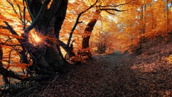 Trees leaves path sunny Wallpaper