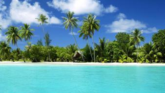 Water trees tropical islands wallpaper