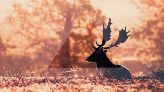 Deer triangle wallpaper