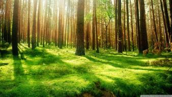 Green nature trees forest grass wallpaper
