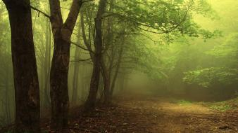 Landscapes nature forest mist wallpaper