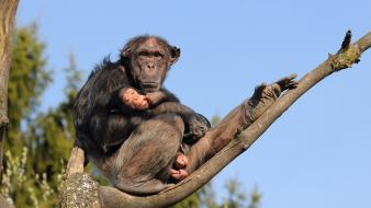 Animals monkeys branches baby wallpaper
