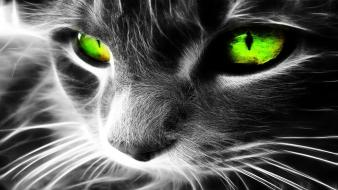 Black and white eyes cats animals green wallpaper