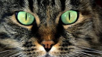 Cats animals green eyes faces wallpaper