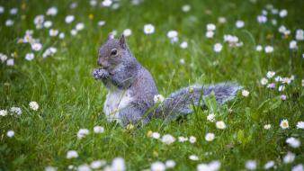Flowers animals outdoors squirrels wildflowers wallpaper
