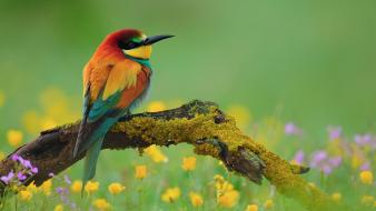 Flowers moss bee eaters birds wallpaper