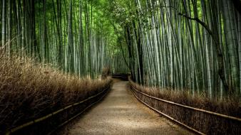 Japan landscapes nature forest bamboo path national geographic wallpaper