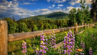 Landscapes nature flowers protection wallpaper