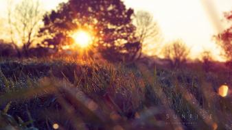 Landscapes nature sun grass disk branches wallpaper