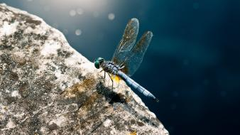 Macro hdr photography dragonflies depth of field wallpaper