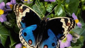 Multicolor butterflies wallpaper