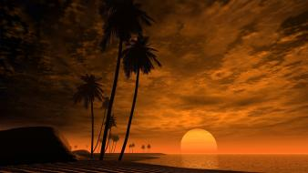 Nature beach palm trees palms drive skies wallpaper