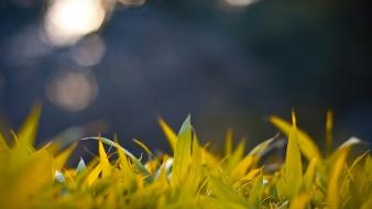 Nature grass bokeh wallpaper