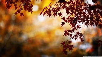 Nature red bokeh foliage wallpaper