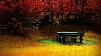 Nature trees leaves grass bench hdr photography autumn wallpaper