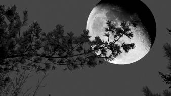 Nature trees moon shadows grayscale Wallpaper
