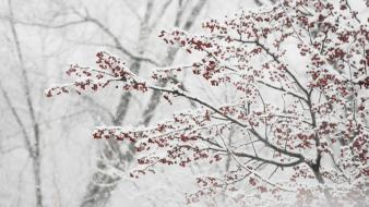Snow trees branches wallpaper